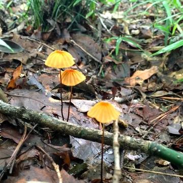 Eiketsu Baba Fungi 04