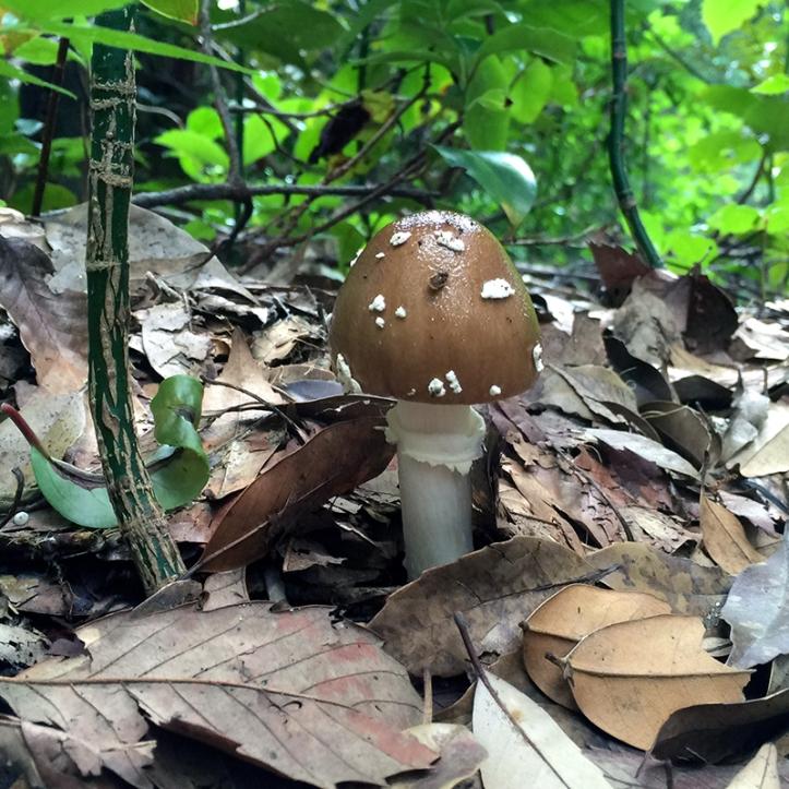Eiketsu Baba Fungi 05