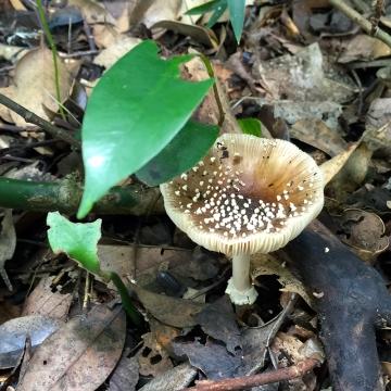 Eiketsu Baba Fungi 08