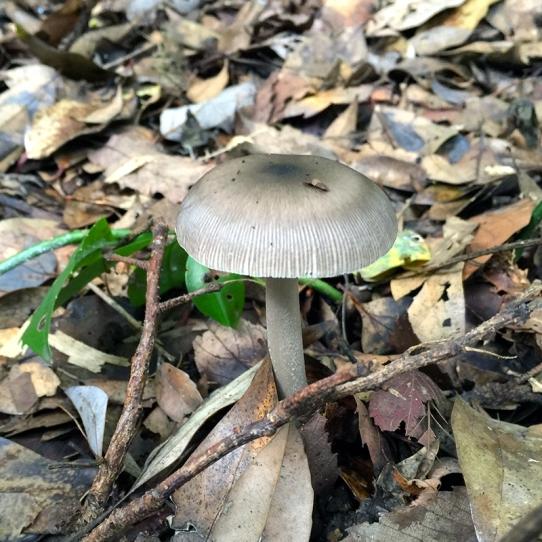 Eiketsu Baba Fungi 10