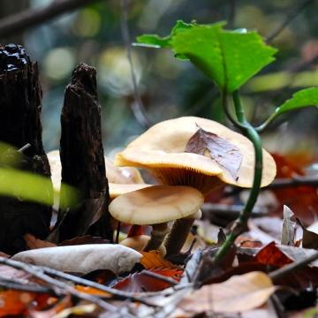 Eiketsu Baba Fungi 17