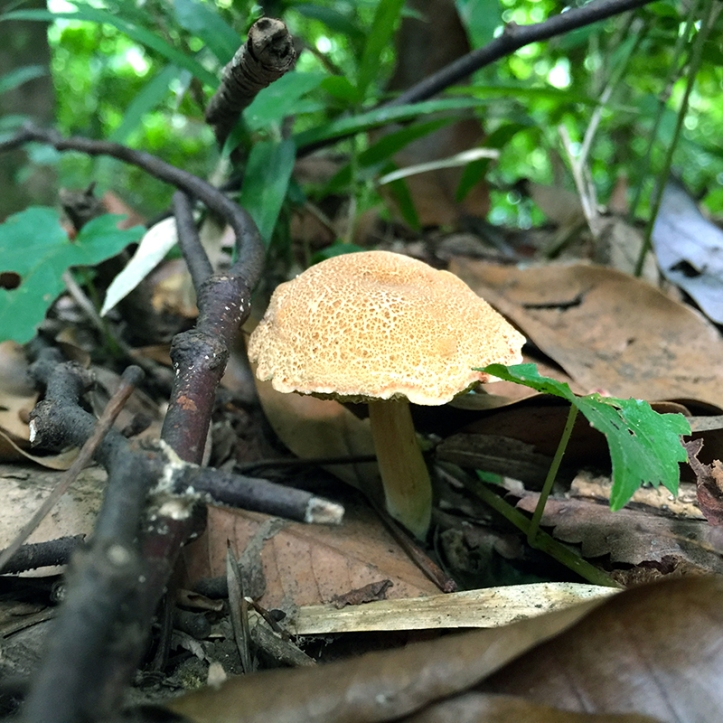 Eiketsu Baba Fungi 19
