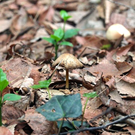 Eiketsu Baba Fungi 24