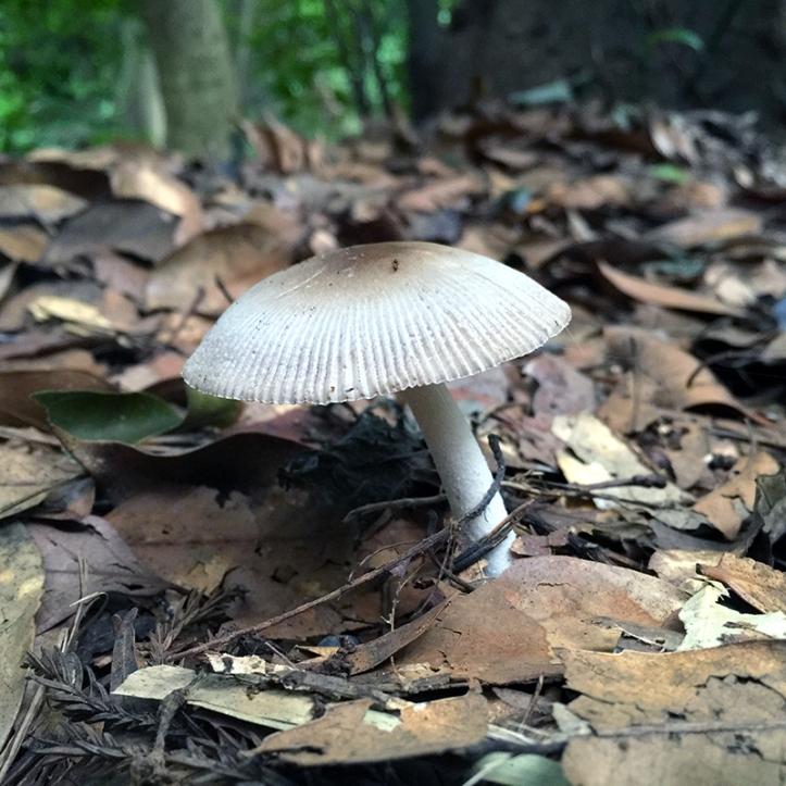 Eiketsu Baba Fungi 26