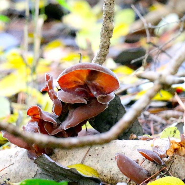 Eiketsu Baba Fungi 33
